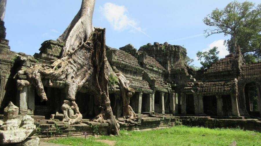The trees at Preah Khan