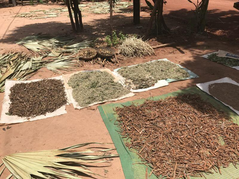 A few different types of herbs drying in the sun - Hill Tribe Travels on temple alternative tour of Siem Reap with Dani from Bees Unlimited