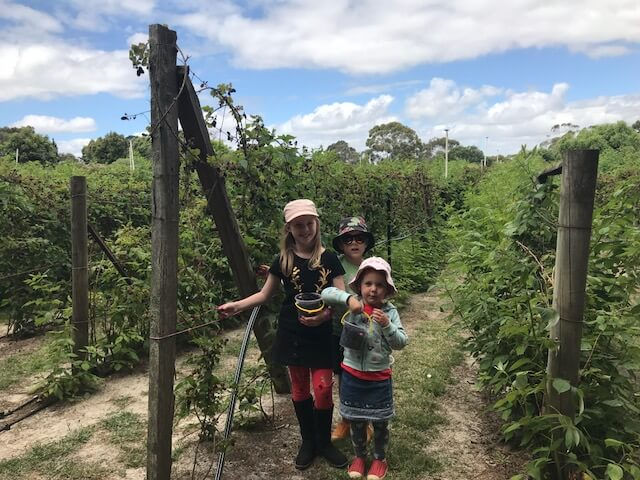 Ned and Olive (and friend) from Hill Tribe Travels berry picking at The Bramble Farm in Langwarrin