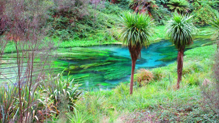 Hill Tribe Travels visited Putururu Blue Spring when we visited Rotorua with kids. Check out the blue water here - just gorgeous