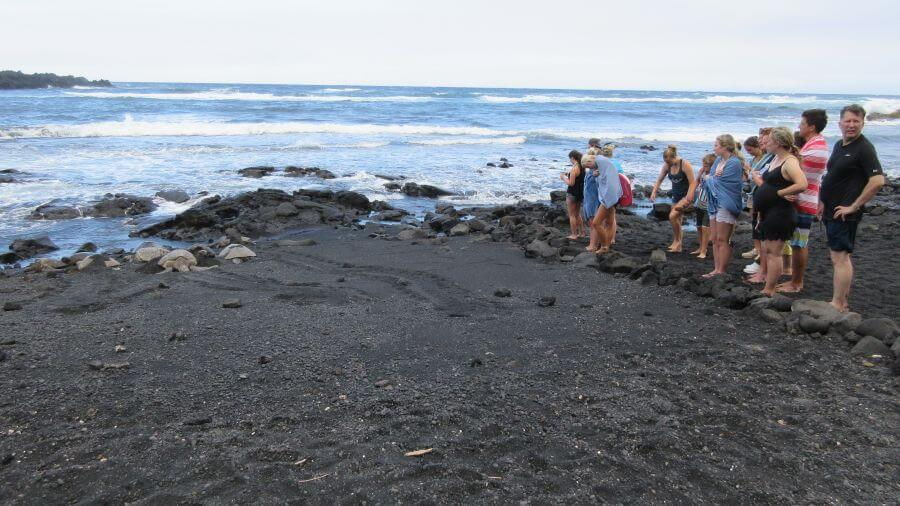 Here you can see the rocks to keep the turtles safe. Hill Tribe Travels loved seeing the green Hawaiian sea turtles on the black sand beach