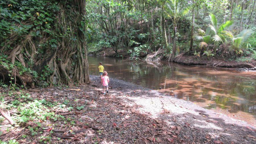 Hill Tribe Travels. Things to do on the Big Island with kids. Exploring jungles on the Big Island, Hawaii.