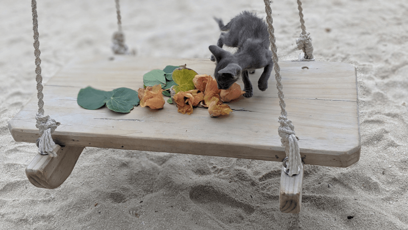 Just a cat enjoying the swings on Thulusdhoo Island! HIll Tribe Travels visited and Ned and Olive loved playing with the cats. Local Maldives. Budget Maldives