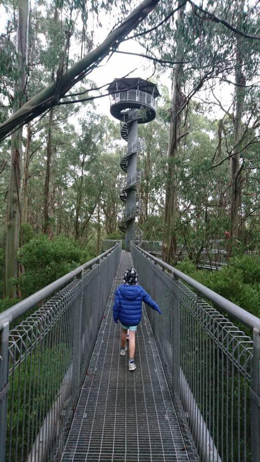 Looking towards the 47 m high tower at Otway Treetop Adventure Park