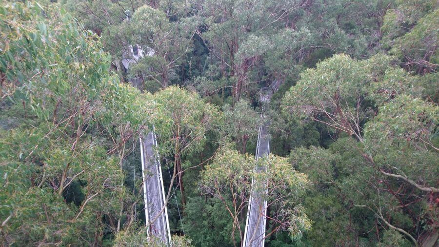 Looking down on the suspended walkway at the Otway Fly. Hill Tribe Travels visited the Otway Fly in Winter
