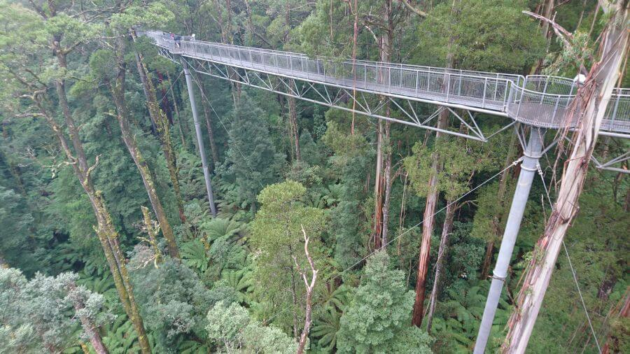 Looking across to the elevated platform. At the Otway Fly Treetop Adventures