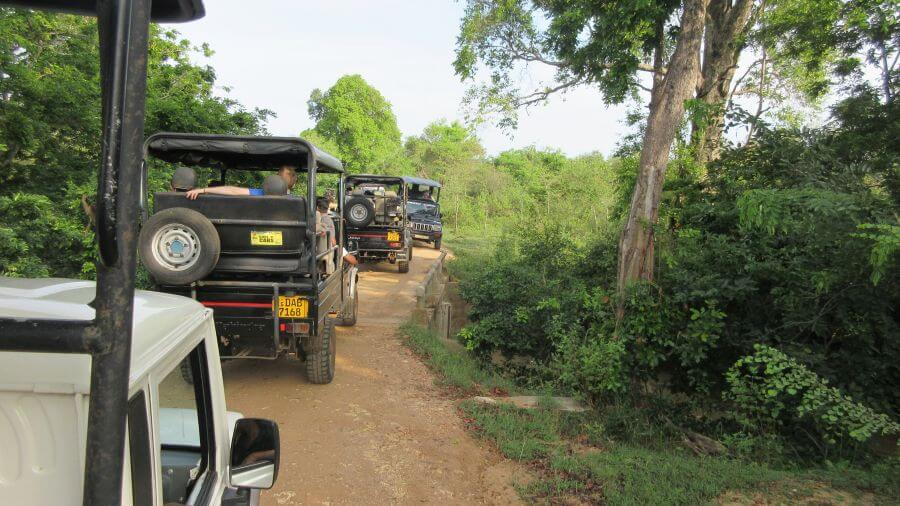 Lots of cars in a row in Udawalawe national Park. It did end up being quite conjested towards the end of our safari. Hill Tribe Travels on sarafri in Udawalawe National Park with kids